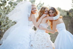 Brides. Three happy beautiful brides together Stock Photo
