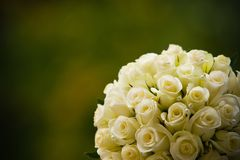 Brides Bouquet of Flowers. Wedding bands with white roses Stock Images