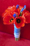 Brides bouquet. Tulip and iris. On the red background Stock Image
