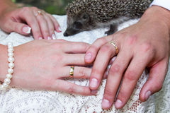 Brides and groom hands. Groom and brides hands with rings and hedgehog in the background closeup Stock Photo