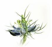 Bridesmaid в зеленом цвете Стоковые Изображения