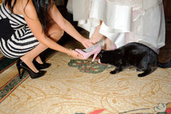 Bridesmaid, Cat and Bride at Home Stock Photo