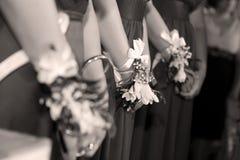 bridesmaids Immagine Stock