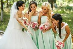 Bridesmaids admiring of bride Stock Photography