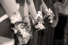 Bridesmaids. Wearing flowers at their wrist, all dressed up the same stock image