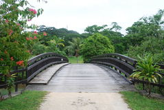 Bridge. Wooden bridge with vegetation in Vanuatu Royalty Free Stock Photos