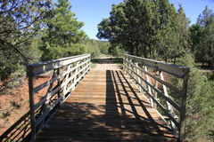 The Bridge. Bridge over a dry river in the forest Stock Images