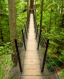 Bridge above the forest Royalty Free Stock Photography