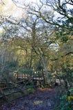 Bridge in 100 acre wood. Royalty Free Stock Photos