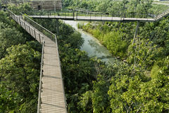 Bridge Across forest. Nature landscape with the river Royalty Free Stock Photo