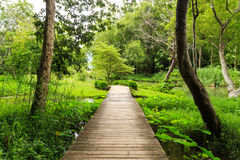 Bridge across the green garden Royalty Free Stock Images