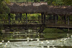 Bridge across a pond, Fiji royalty free stock photo