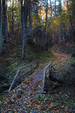 The bridge across the ravine in autumn forest at night Stock Photography