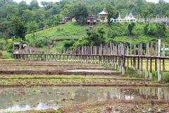 Bridge across rice field white cloud Stock Photos