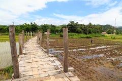 Bridge across rice field white cloud Stock Image
