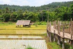 Bridge across rice field white cloud Stock Photo