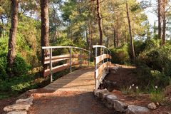 The bridge across the stream in the early morning in the park in the forest Hanita, Israel royalty free stock photos