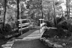 The bridge across the stream in the early morning in the park in the forest Hanita, Israel royalty free stock images