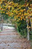Road less travelled. Bridge along a fall pathway Stock Photo