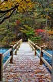 Bridge in autumn. Of jiuzhaigou ,china royalty free stock images