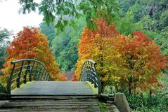 Bridge in autumn forest Royalty Free Stock Photo