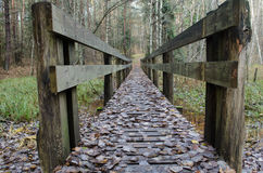 Bridge in autumn forest Stock Image
