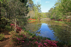 Bridge and Azaleas at Callaway Gardens Stock Photography