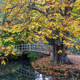 Bridge Beneath Chestnut. A view of a Japanese style bridge, framed by a horse chestnut tree stock images