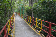 Bridge for bicycle near tree Stock Photos