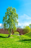 The bridge and birch tree Royalty Free Stock Photography