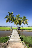 Bridge and coconut trees. At paddy field Stock Photo