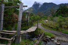 Bridge in the Cocora Valley, near to the colonial town of Salento, in Colombia. The Cocora Valley, a beautiful national park in the Eje Cafetero, an UNESCO stock photos