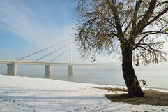 Bridge on Danube river. Winter morning by Danube river with tree and bridge in fog Royalty Free Stock Photography