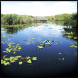 Bridge in Everglades National Park Stock Photos