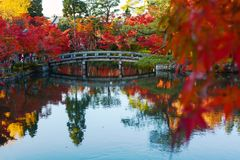 Bridge and fall colored trees reflecting in a pond during autumn in Kyoto, Japan. Fiery red displays of color from maples, a tree that is synonymous with Kyoto Royalty Free Stock Photography