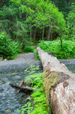Bridge. A fallen tree makes a perfect bridge across the creek and into the woods Royalty Free Stock Image