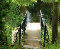 Bridge through forest Stock Image