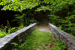 Bridge in a forest Royalty Free Stock Photography