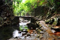 Bridge in forest Stock Photos