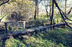 Bridge in the forest Royalty Free Stock Photography