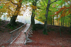 Bridge in the forest. Wooden bridge in the autumn forest Royalty Free Stock Image