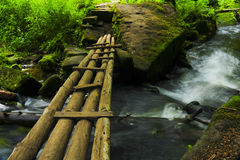 Bridge in the forest Royalty Free Stock Photos