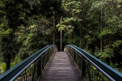 Bridge in forest Royalty Free Stock Image