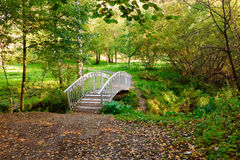 Bridge the forest royalty free stock image