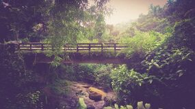 Bridge in forest Stock Photography