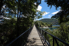 A bridge in a forest. In Argentina Stock Photography