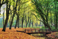 Forest bridge. Bridge in the forest in autumn in het Amsterdamse bos (Amsterdam wood) in the Netherlands. HDR Royalty Free Stock Images