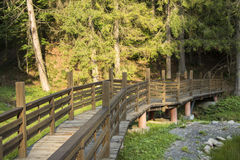 Bridge through the forest. Among the green trees Royalty Free Stock Images