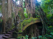 Bridge in the forest of monkeys Royalty Free Stock Images