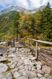 Bridge in the forest Stock Images